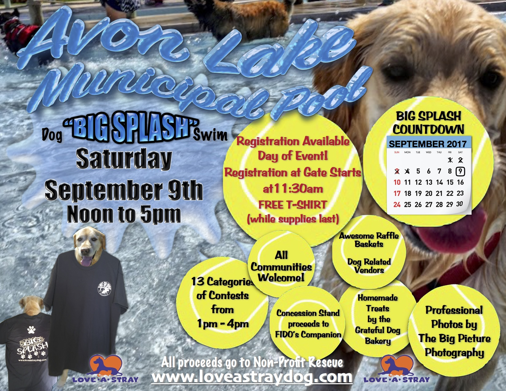 12th Annual Big Splash Dog Swim Flyer