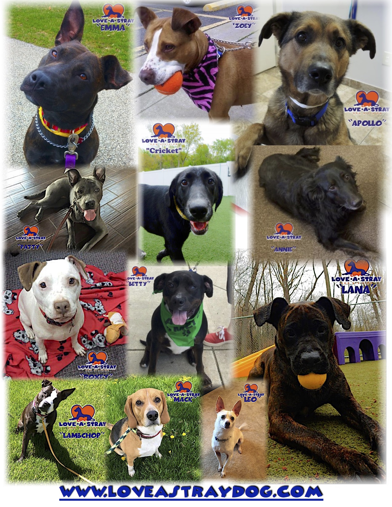 Current Adoptable Dogs