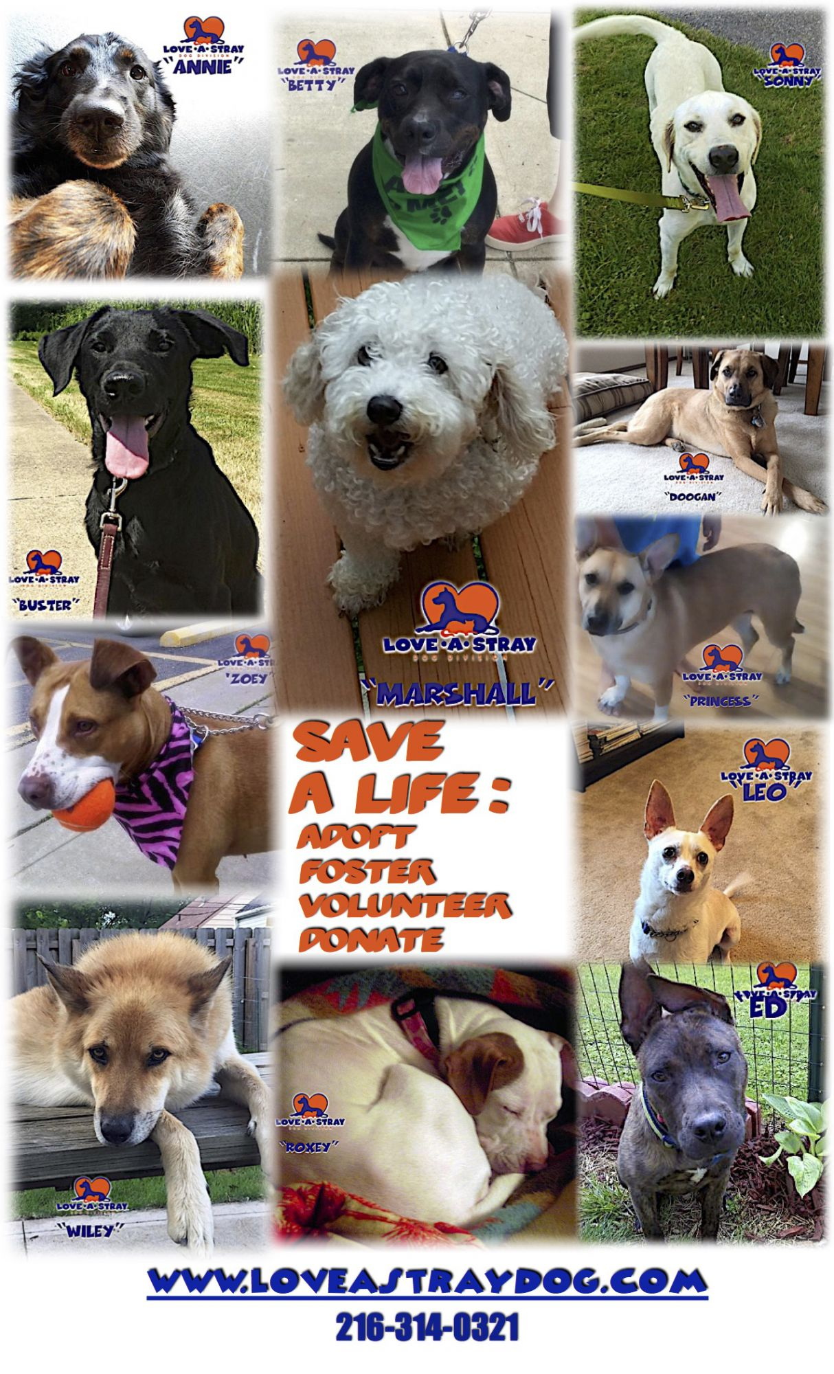 Current Adoptable Dogs16